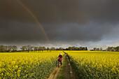 Path through Oilseed Rape Field Norfolk April