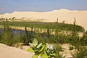 Sand dunes and vegetation in the sunlight, Mui Ne, Binh Thuan Province, Vietnam, Asia