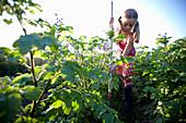 Girl (8-9 yeras) weeding, Lower Saxony, Germany
