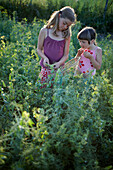Two girls (6-9 years) picking pea pods, Lower Saxony, Germany