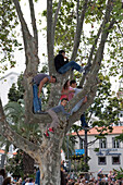 Spectators in a tree watching the Madeira Flower Festival Parade, Funchal, Madeira, Portugal