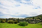 Pasture with traditional stone wall, Ballyduff, Dingle Peninsula, County Kerry, west coast, Ireland, Europe