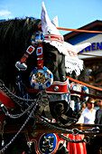 Draught horses with decorated bridles, Oktoberfest, Munich, Bavaria, Germany