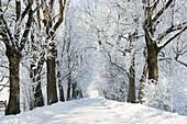 Alley in snow, winterscenery near Benediktbeuern, Upper Bavaria, Germany