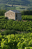 Grape Harvesters' Cabin Amidst The Vines, Roche-Saint-Secret, Drome (26), France