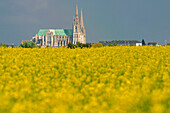 Notre Dame Cathedral Of Chartres Behind A Colza Field, Eure-Et-Loire (28)