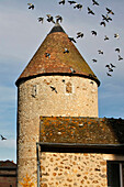 Pigeons Flying Above The King'S Tower, An Old 13Th Century Keep, Bonneval, Eure-Et-Loir (28), France