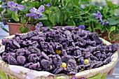 Violet Sweets, The Maison De La Violette, City Of Toulouse, Haute-Garonne (31), France