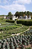 The Vegetable Gardens At The Chateau De La Chatonniere, Azay-Le-Rideau, Indre-Et-Loire (37), France
