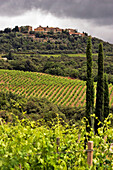 Landscape Of Vineyards In Front Of The Village Of San Angelo In Colle, Montalcino Region Known For Its Appellation Brunello Viticulture And Its Montalcino Red, Tuscany, Italy