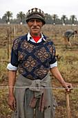 Vineyards Near Casablanca, Terroir Of Benslimane. Vineyard Workers, Morocco, Maghrib, North Africa