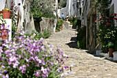 Flowering Little Streets, La Judiaria, Jewish Quarter, Castelo De Vide, Alentejo, Portugal