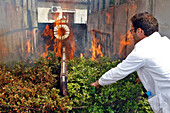 Testing The Effects Of New Retardants On The Local Ecosystem'S Vegetation In A Fire Tunnel, Products Used In The Fight Against Forest Fires, Scientific Studies And Research Applied To The Fields Of Fire Prevention And Emergency Services, Ceren Center For