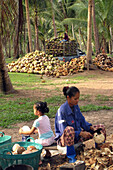 Preparation Of The Coconuts. The Dried Pulp, The Copra Is Used In Making Oil In Great Quantities Destined For The Food Industry, Mostly In Asia. Copra Oil Is Used In The Making Of Monoi Products, Bang Saphan Province, Thailand