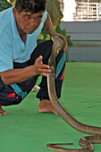Snake Trainer, Snake Farm, Banks Of The Klongs, Small Canals, Bangkok, Thailand