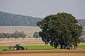 Traktor, Pflug, Feld, Baum, Hügellandschaft
