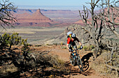 Mountainbiker, Porcupine Rim Trail, Castle Valley, Moab, Utah, USA, MR