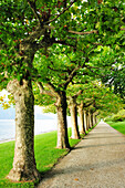 Alley of plane trees, Lake Como, Lombardy, Italy