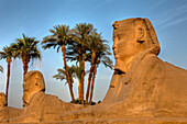 Sphinxes at Luxor Temple, Luxor, Egypt