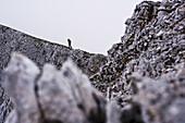 Mountaineer ascending Sonntagkarspitze, Innsbruck, Karwendel range, Tyrol, Austria