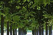 Im Schlosspark von Schloss Augustusburg, Brühl,  Nordrhein-Westfalen, Deutschland, Europa, Dominique Girard (ausgebildet in Versailles) entwarf ab 1728 den Brühler Schlossgarten, seit 1984 UNESCO-Weltkulturerbe, Rokoko