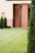 Zypresse mit dem Blick ins Garten mit Wiese