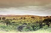 Hügellandschaft in der Nähe von Ixope, KwaZulu Natal, Ostkap, Südafrika, Afrika