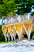 South African Champagne, Wineyard, Palmiet Valley, Paarl, Cape Town, Western Cape, South Africa, Africa