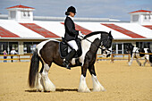 Gypsy horse exhibition at Florida State Fairgrounds Tampa