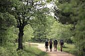 Camino de Santiago, oaktree forest,  San Juan de Ortega,  Burgos,  Castilla,  Castilla León,  Spain