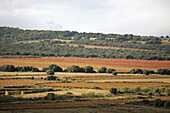 Vines in autumn in Rioja wine region,  La Rioja,  Spain
