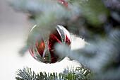 Christmas bauble on tree
