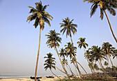 India,  Goa,  Colva beach,  coconut palm grove,  fishing boats
