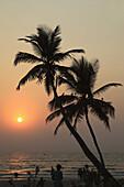 India,  Goa,  Colva beach,  coconut palm grove,  sunset,  silhouette