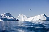 Icebergs of Ilulissat Kangerlua Isfjord in the sunlight, Disko bay, Kitaa, Greenland