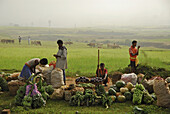 Market stalls in front of green rice fields, Tribal region in Koraput district in southern Orissa, India, Asia