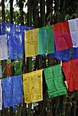 Prayer flags at Enchey monastery, Sikkim, Himalaya, Northern India, Asia