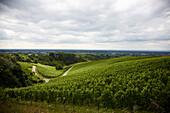 Blick über Weinberge bei Baden-Baden, Baden-Württemberg, Deutschland