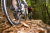 Mountainbikers passing forest trail, Palatine Forest, Rhineland-Palentine, Germany