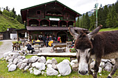 Donkey, Anton-Karg-Hut in background, Kaisertal, Ebbs, Tyrol, Austria