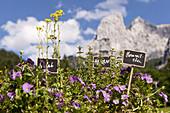 Herb garden, Anton-Karg-Hut, Kaisertal, Ebbs, Tyrol, Austria