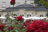 Rose garden of the Neue Residenz, Bamberg, Upper Franconia, Bavaria, Germany