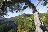 Bend of the river Thaya, national park, Thaya, Lower Austria, Austria