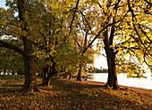 Autumn scenery at lake Chiemsee, Krautinsel, Bavaria, Germany