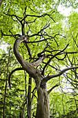 Wood, Trees, Green, Limb, Sustainability, Nature, Nobody, Plants, Leaves, Germany, Bavaria, Berg
