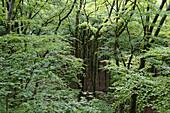 Deutschland, Bayern, Berg, Wald, Bäume, Grün, Ast, Nachhaltigkeit, Natur, Niemand, Pflanzen, Blätter