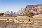 Acacia Tree in the libyan desert, Akakus Mountains, Sahara, Libya, North Africa