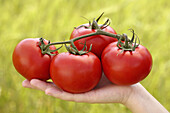 Tomatoes on hand