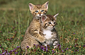 two young kittens playing in grass