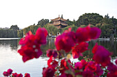 Red flowers at Dianchi Lake, Daguan Park, view at pavillion, north-west of Kunming City, Kunming, Yunnan, People's Republic of China, Asia